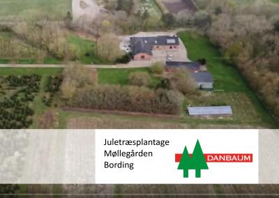 Reference Danbaum, Møllegården Bording, jordmontage